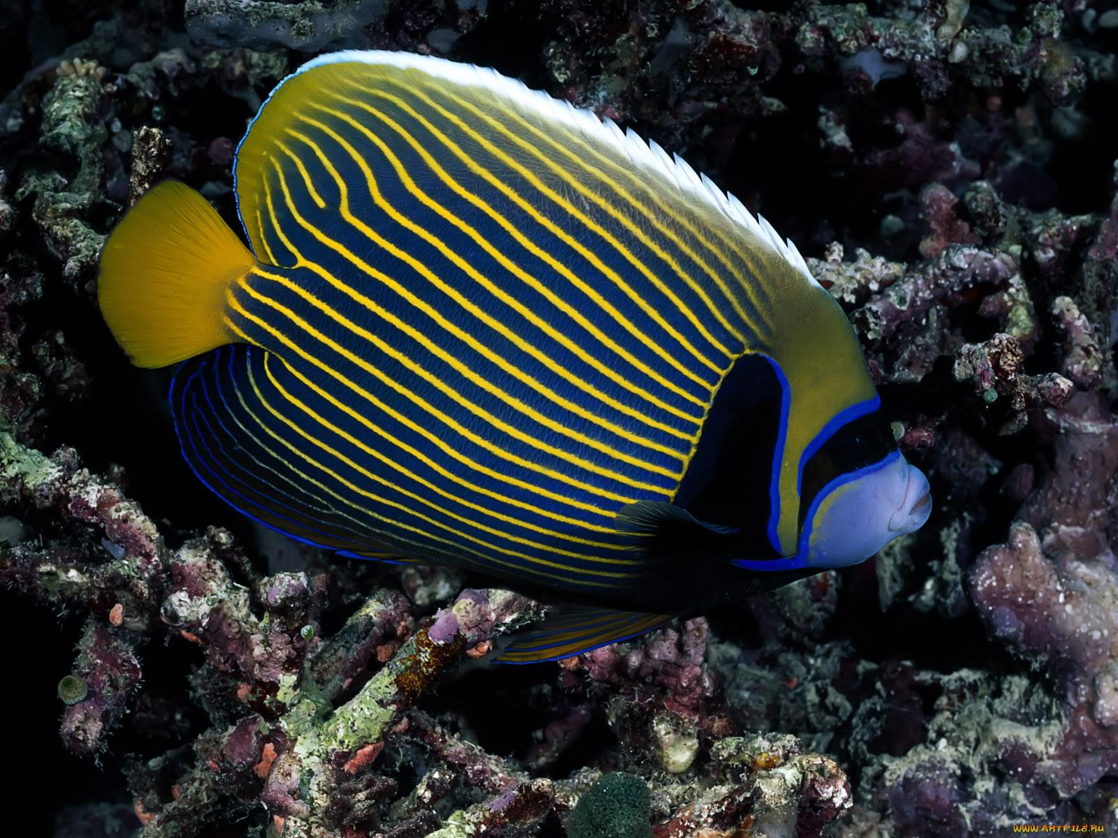 Самые красивые рыбки картинки